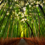forestbamboo